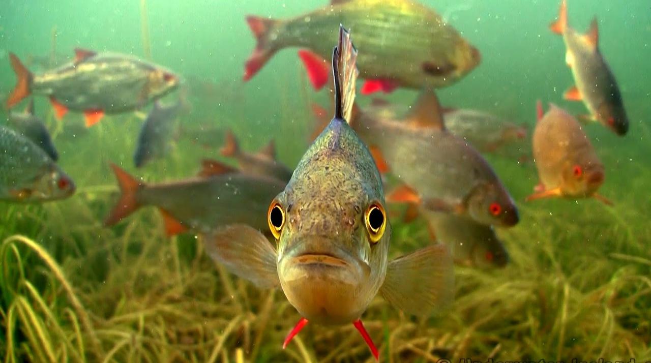 ВТюменской области действует нерестовый запрет нарыбную ловлю